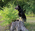 Brando on a stump
